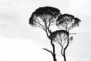 silhouette-photo-of-trees-962312